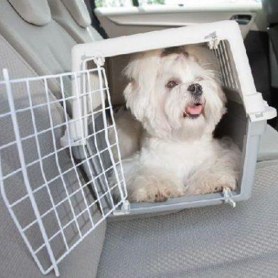 transporte-para-cachorros-no-carro